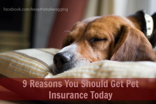 9 Reasons You Should Get Pet Insurance Today