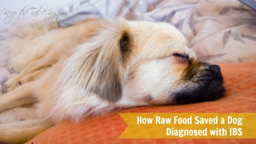 How Raw Saved a Dog Diagnosed with IBS