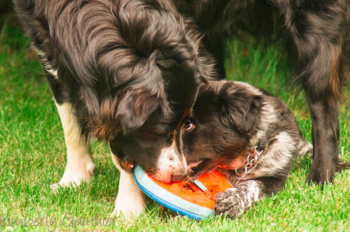 How to Stuff a Kong | Another Treat for Your Dog's Kong Toy