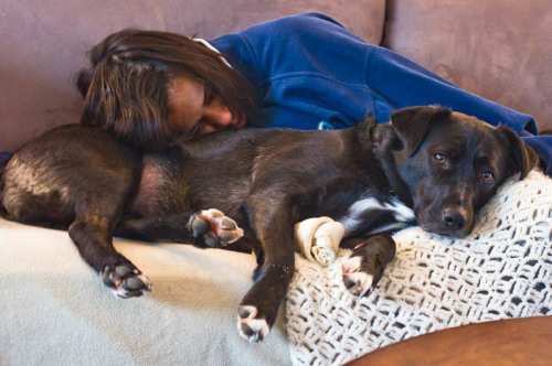 Video Of A Sleeping Pug Dog Getting Massage