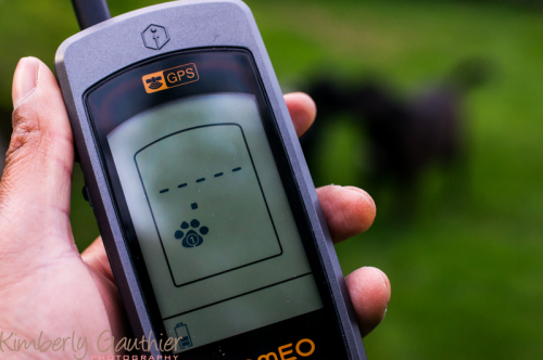 RoamEO Pet Monitor System Review | Using Tech When Our Dogs Roam