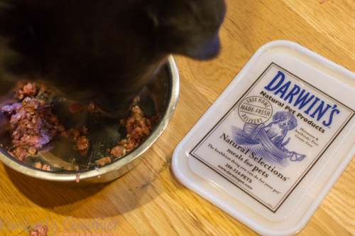 Raw dog food how much does a raw food diet for dogs cost keep raw food diet for dogs darwins pets dog nutrition dog care forumfinder Choice Image