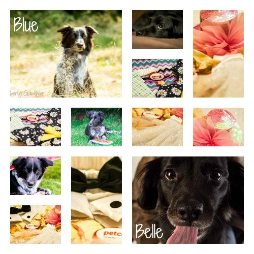 Petco Wedding Clothing Collage, Belle, Blue, Petco Dog Outfits