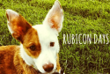 Rubicon Days, Pet Blogger Gift Exchange