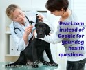 Pearl.com instead of Google for your dog health questions
