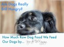 How Much Raw Dog Food to Feed Dogs