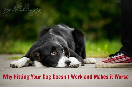 What I Learned After I Hit My Dog