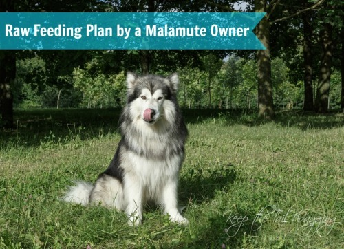 Raw Food Diet For Dogs Keep The Tail Wagging