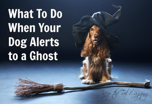 What To Do When Your Dog Alerts to a Ghost