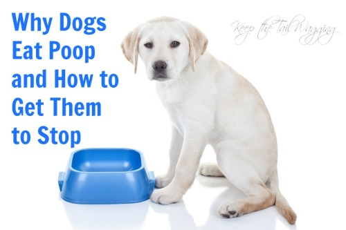 Why Dogs Eat Poop and How to Get Them to Stop